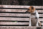 Waiting on Bench